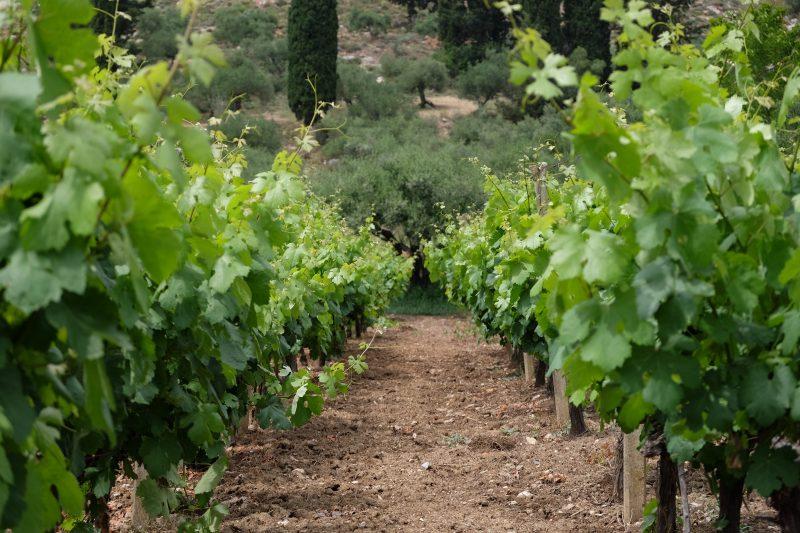 ワインの産地としても有名なクレタ島。