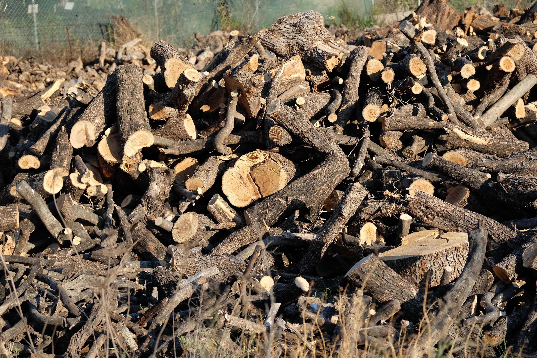 木材としてのオリーブ